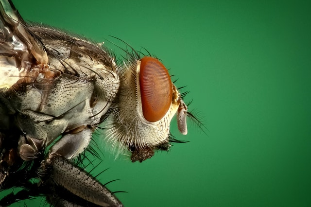 cockroach pest control in Singapore
